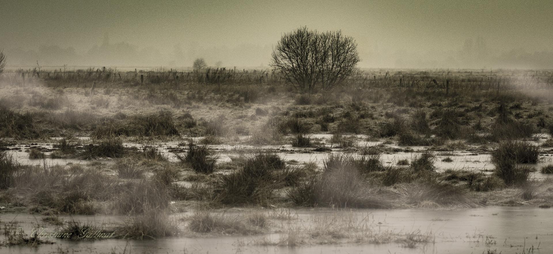 Vogelschutzgebiet Steinhude