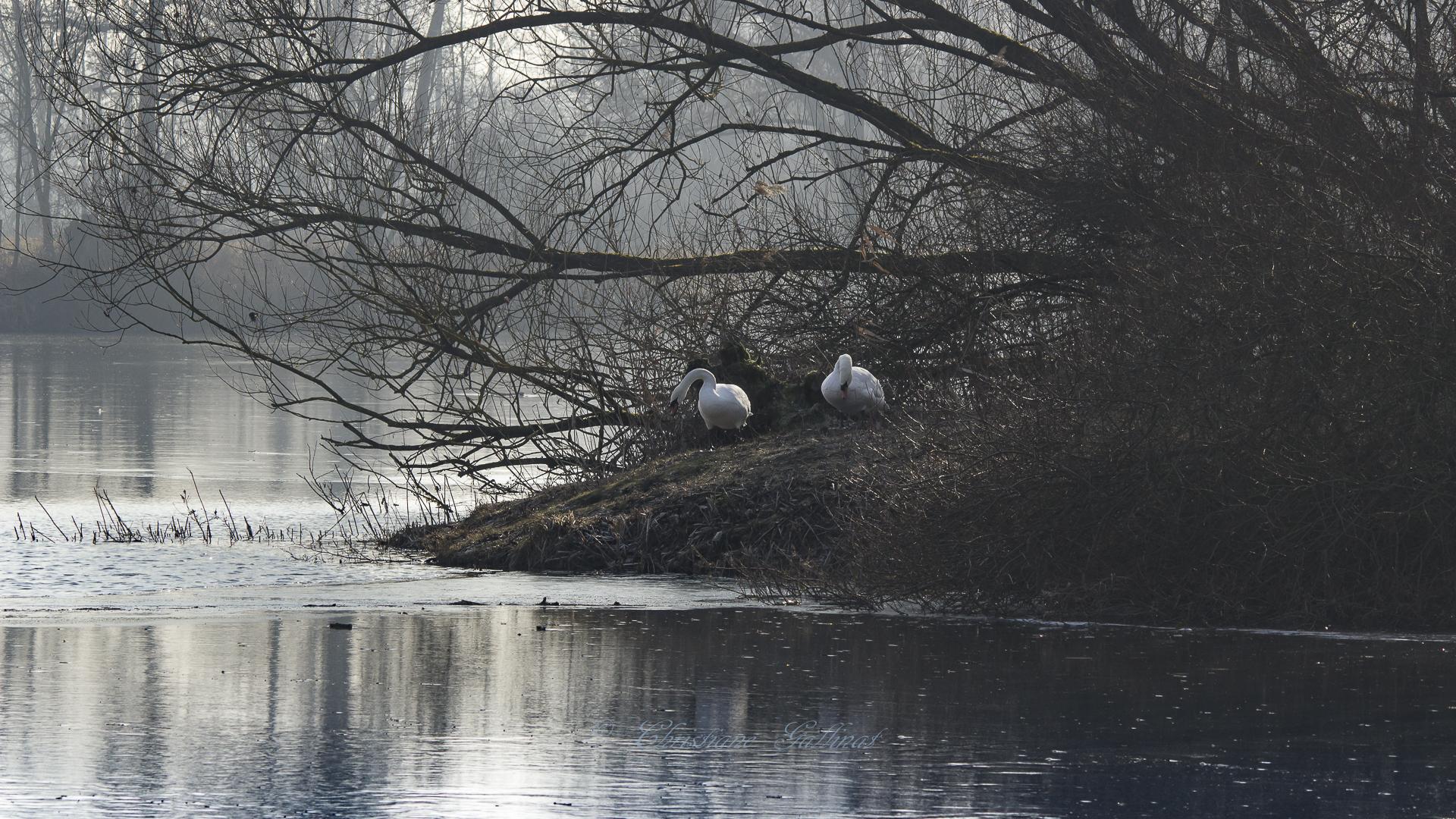 Schwanensee in Laatzen