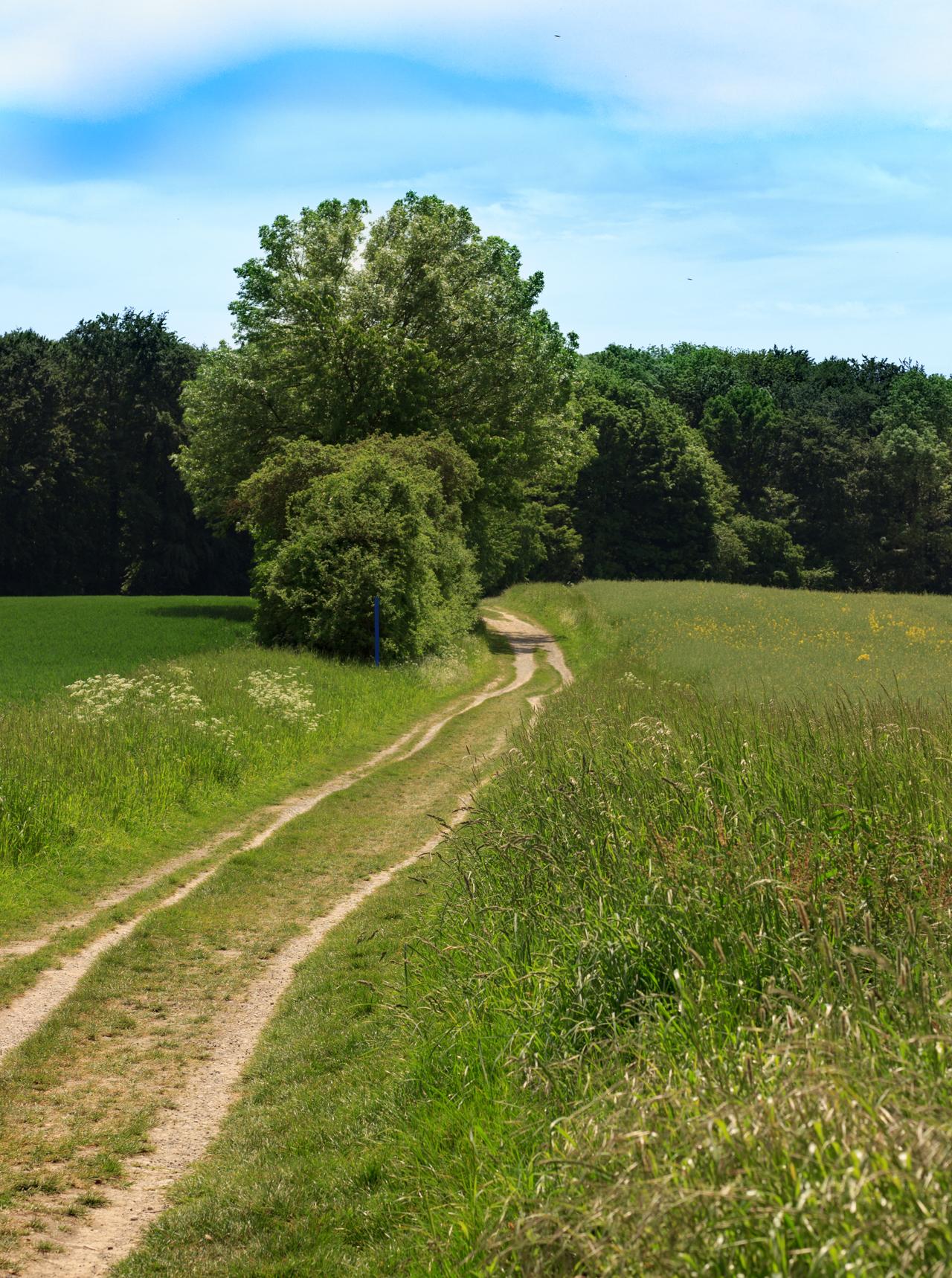Gehrdener Berg, ein kleiner Weg durch die Natur