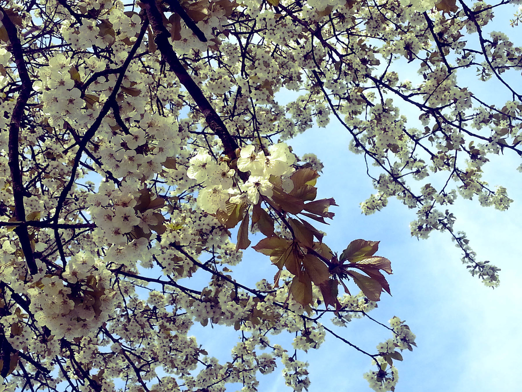 Sad Spring