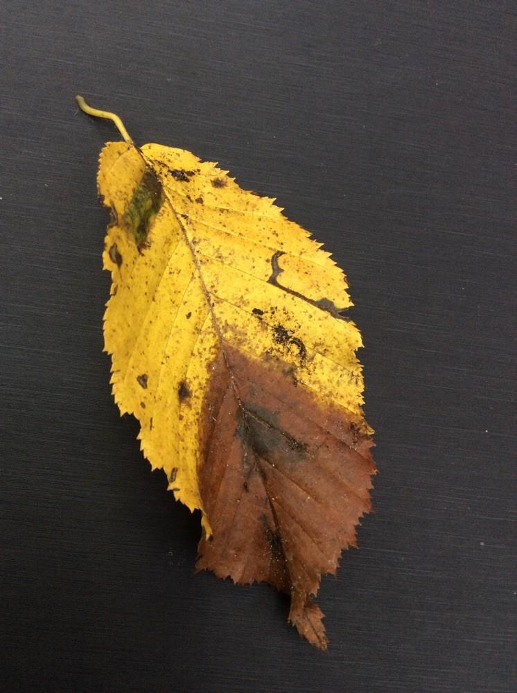Die Blätter sind alleine schon Kunst!