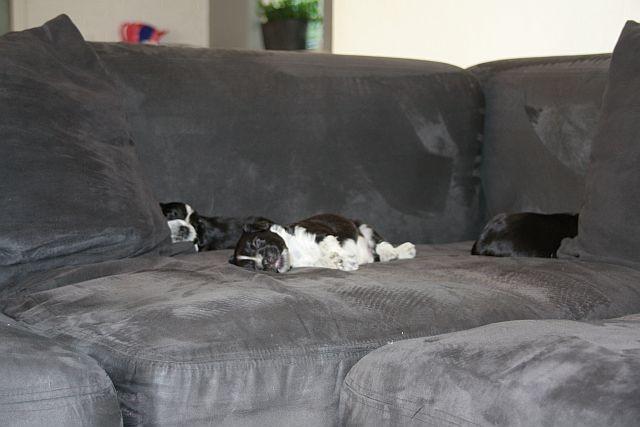 das erste Mal auf die große Couch.....