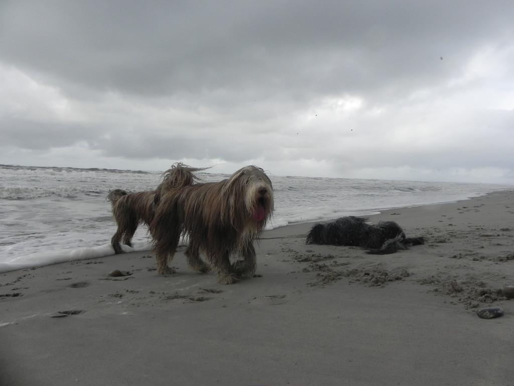Im Sand wälzen geht bei jedem Wetter!