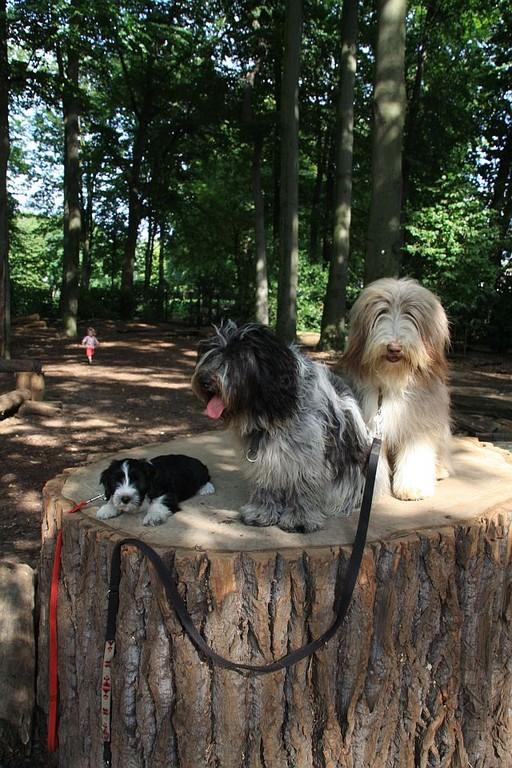 .......kleine Pause auf dem Baumstamm.....