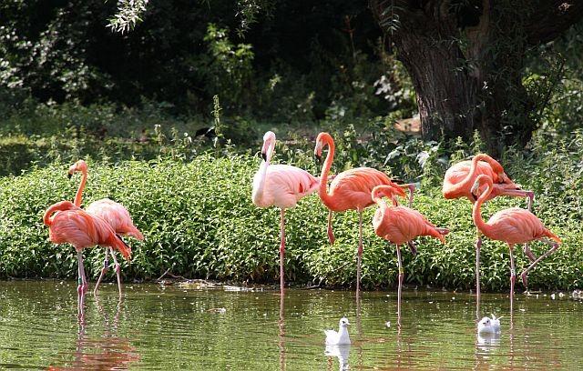 die Flamingos tanzten nur für uns.......