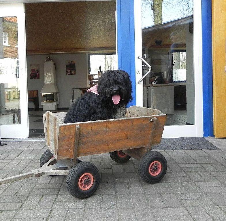 ...und ich hab meinen eigenen Chauffeur!