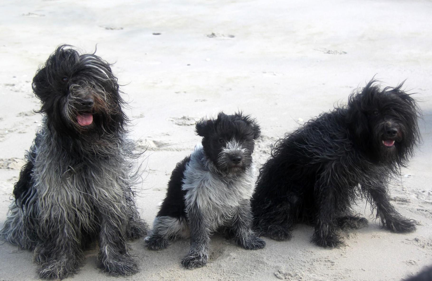Familienfoto: Anton, Mac und Lola