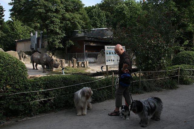 auch beim Nashorn keine Reaktion.....