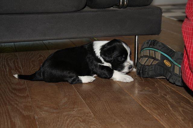 mal sehen, was so unter dem Sofa liegt.....