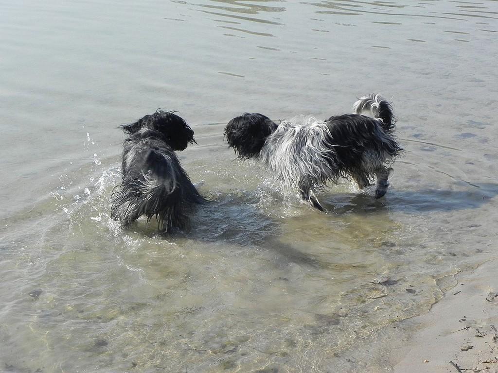 selbst im Wasser auf Tuchfühlung....