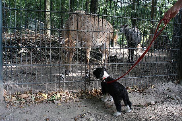 .....pöh, auch vor euch habe ich keine Angst (ok, schließlich ist  ja noch ein Zaun dazwischen!)
