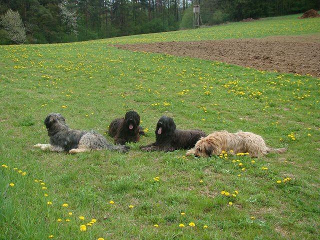 Ella,Dark,Colette,Giulia