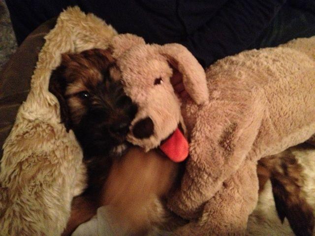 Sein neuer Freund Kasimir