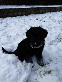 Mein erster Schnee