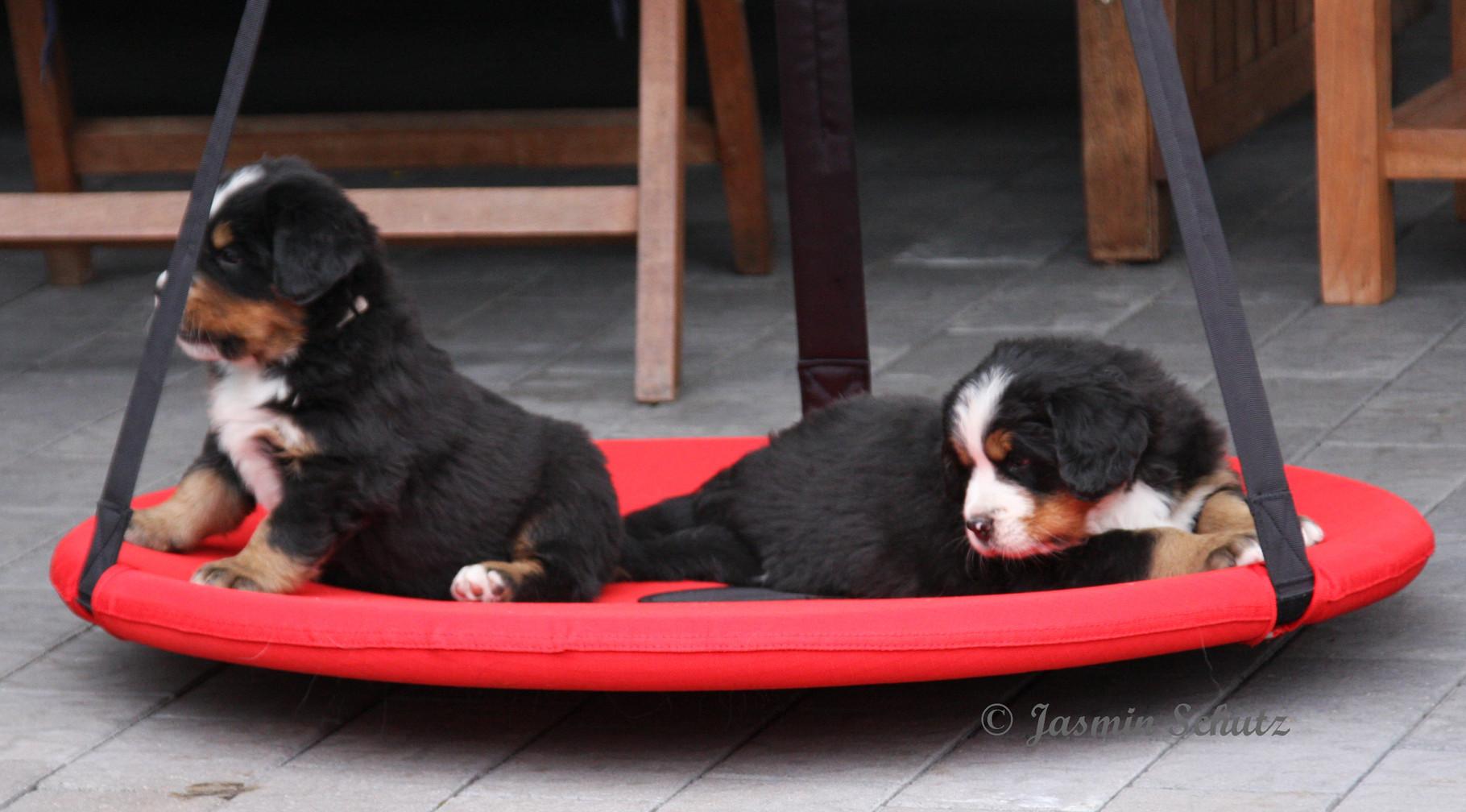 Hundeschaukel