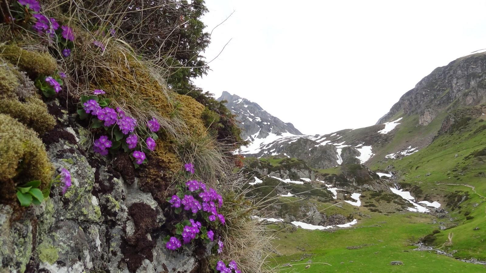 Superbe rocher fleuri au détour d'une variante