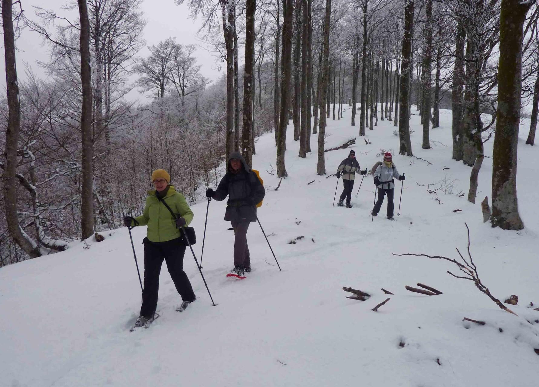 Agréable parcours forestier enneigé