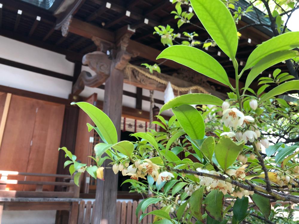 皇大神社 尼崎 榊の花