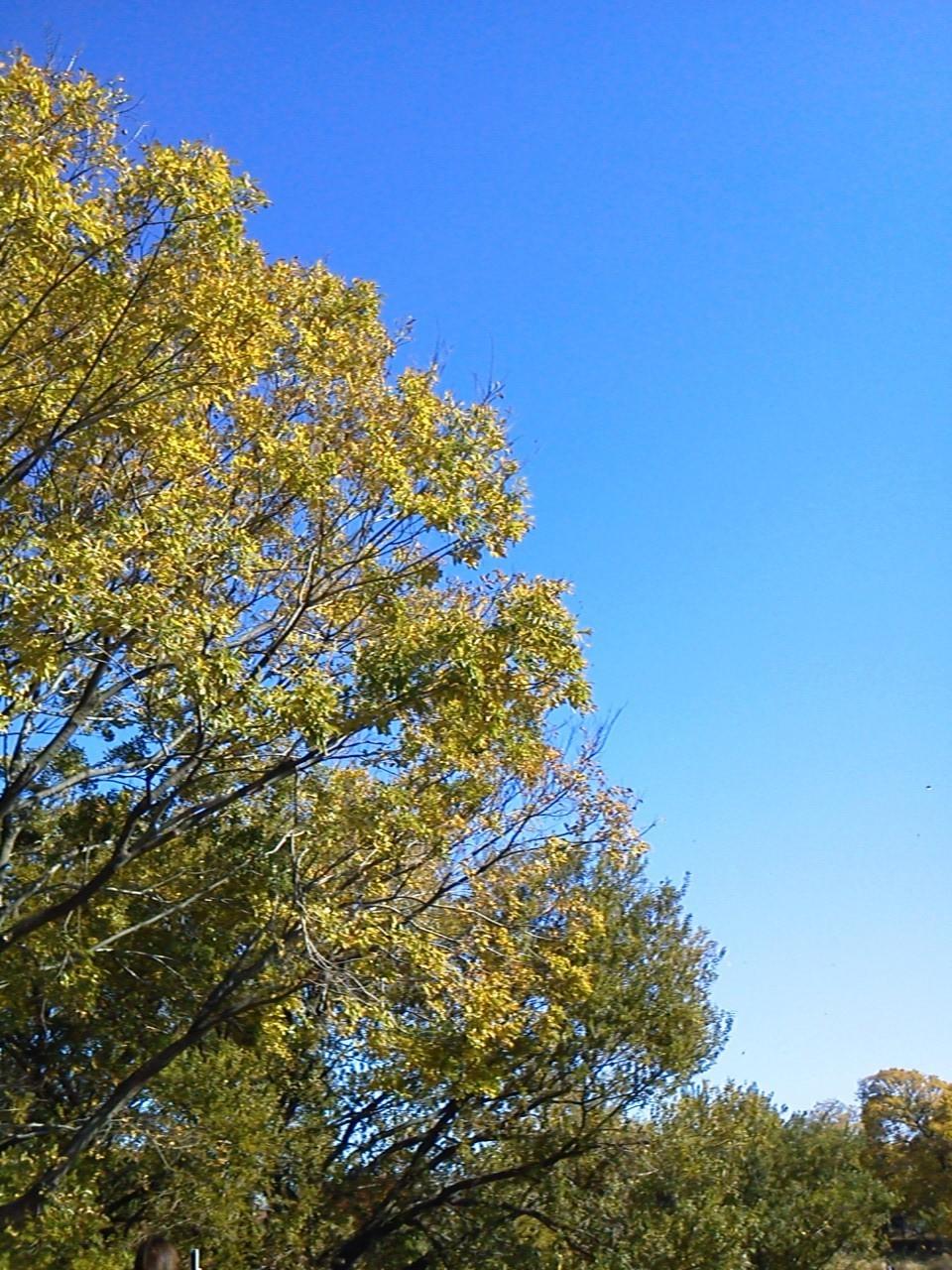 秋真っ盛り。いい天気で走れて最高でした。来年はハーフ参加してみます!
