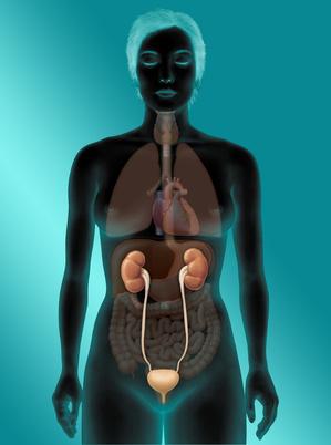 Urogenitalbereich