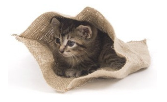 Katze im Sack kaufen? Nicht bei uns!