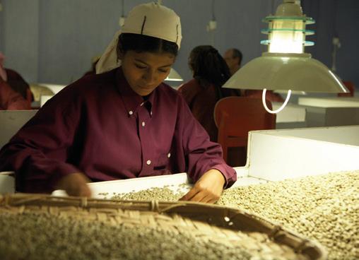 Kaffee Indien