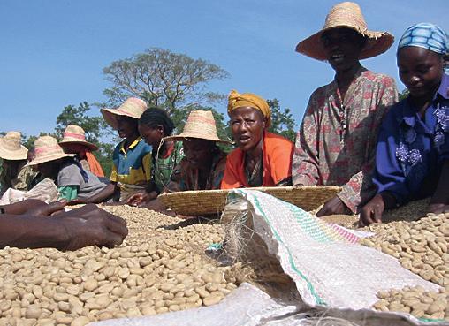 Kaffeetrocknung Äthiopien