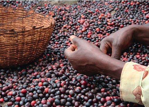 Natural Coffee aus Äthiopien