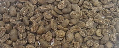 Rohkaffee Kolumbien Maragogype