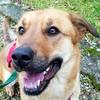 Bruni Mix  Zuhause gesucht Association CANIMA Zukunft für Tiere Tiervermittlung Notfall