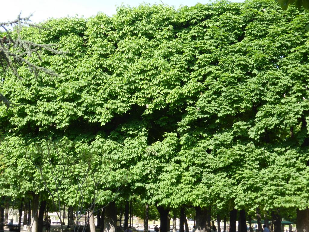 Das Blätterdach ist kompakt