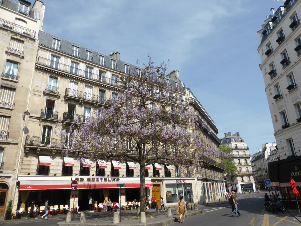 Rue de l'Odéon - Die Jacarandas blühen in Paris