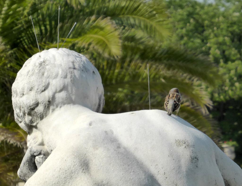 Der Mann mit dem Vogel