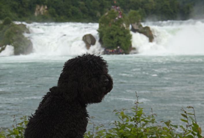 Der Rheinfall. Das war schon was anderes als die kleinen Wasserfälle an der Amper, wo das Wasser die Staustufen herunterplätschert. Dort musste ich immer Sitz und Platz auf den Brücken üben. War anfangs komisch, aber jetzt weiß ich wozu.