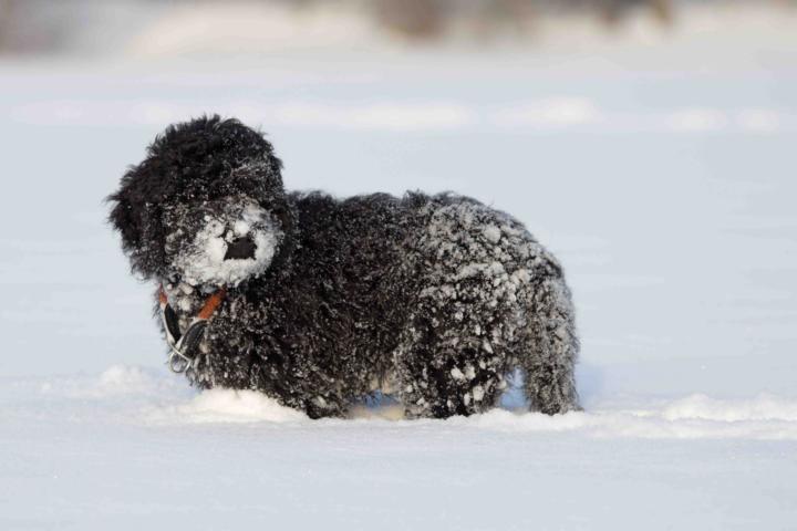 Ausruhen im Schnee am Neujahrstag 2015.