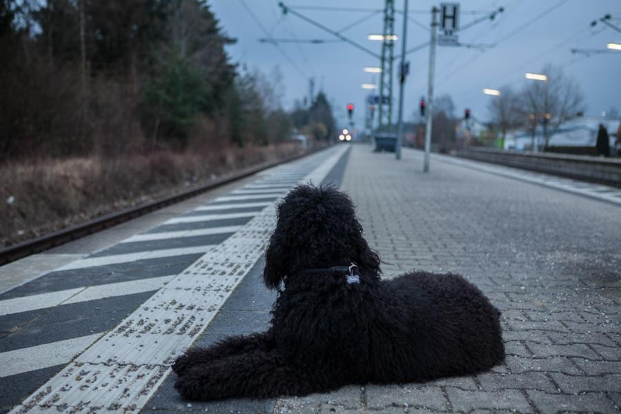 Da kommt die S-Bahn.