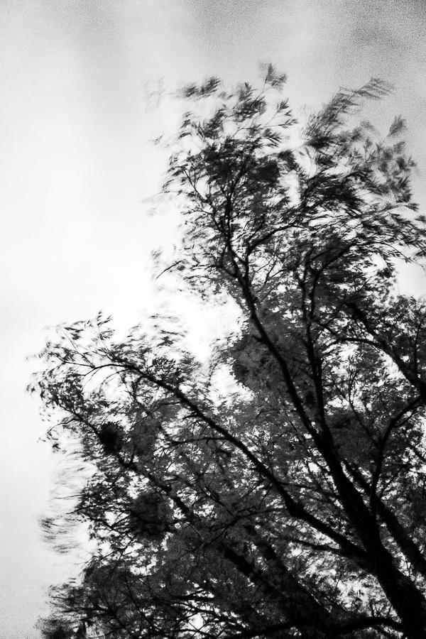 Michael Bennoun - vent - wind