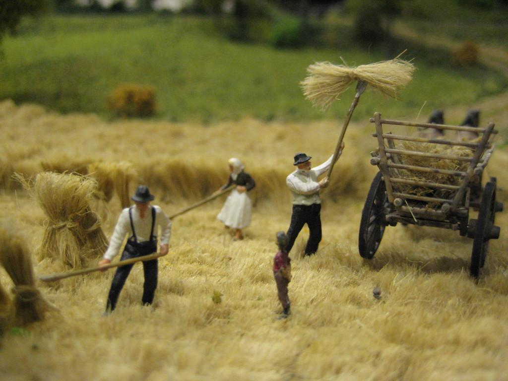 Auch das Getreide wird abgeerntet