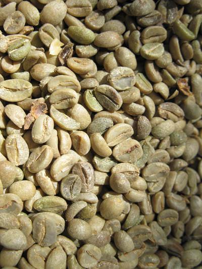 Café parchemin (suite au dépulpage et séchage)