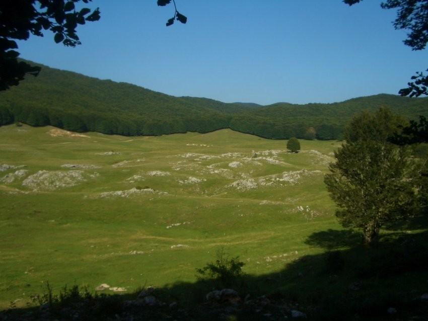 Parco dei monti Simbruini - Boletus aestivalis - agosto 2014