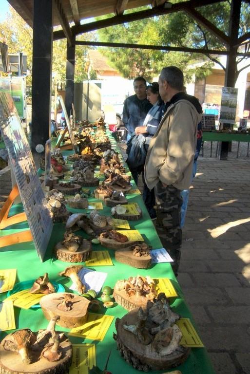 Mostra di micologia a Valle di Perna Roma 12 e 13 Novembre 2011
