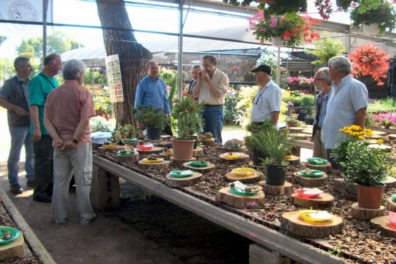 Mostra micologica a Torvajanica del 16 giugno 2012 presso il vivaio Crescenzo