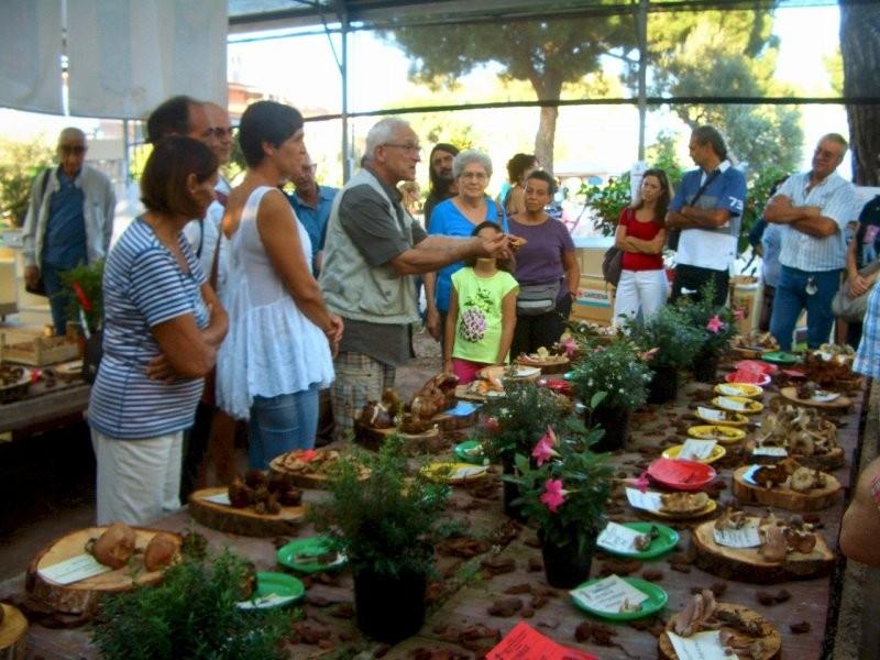 Gruppo Micologico Pomezia Onlus