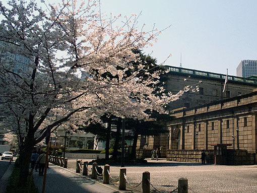日本銀行本店前のサクラ
