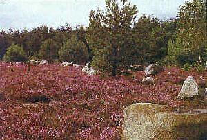 Küstenheide-Landschaft