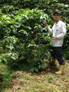 「コーヒーを自給自足する人を増やす」ために、沖縄で栽培からやる店を経営。