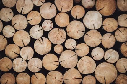 Wie Entwaldung die Natur beeinflusst...
