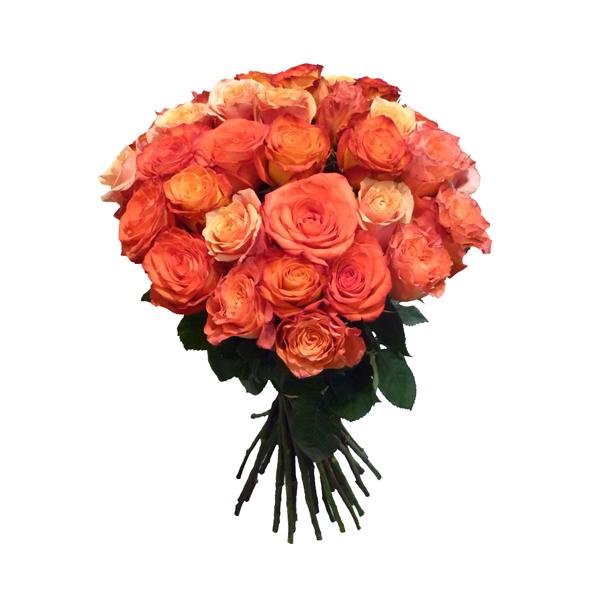 blumen bestellen rosenkavalier die welt der rosen. Black Bedroom Furniture Sets. Home Design Ideas