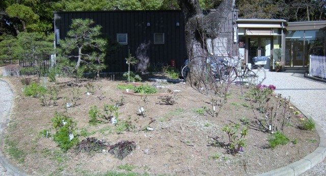八幡山の洋館 管理棟前花壇