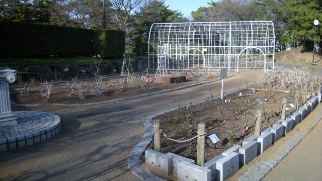 平塚市総合公園 南側 バラ園